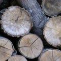 drewno do wędzenia